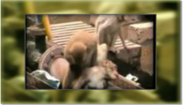 Watch this monkey save his friends life at a busy railway station