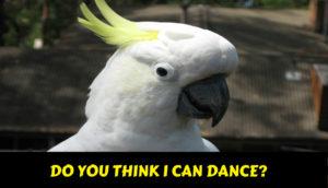 Funny Video - Crazy Parrots Dancing